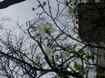 Erik ağaçları erken çiçek açtı.            …   SON DAKİKA