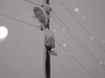 Kışlaçay da Kameralar Dayanamadı