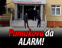 Pamukova'da Domuz Gribi şüphesi