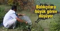GÖLETLERE 53 BİN SAZAN BALIĞI YAVRUSU BIRAKILDI