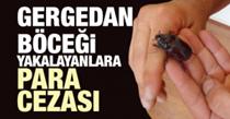 Bakanlıktan 'Gergedan böceği' açıklaması