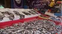 Balık Özlemi Bitti… Sezon Bereketli Başladı..