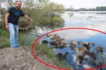 Mollaköy Göleti'nde korkunç manzara