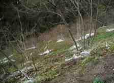 Kışlaçay Köyü'nde Potasyum Nitrat Zamanı