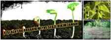 Kışlaçay da Organik Sebze Dikme Zamanı