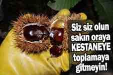 Ormandan kestane toplayan 2 kişiye 173'er lira para cezası..