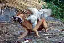 Kışlaçay Mahallesinde Aç Kalan Köpekler Tavuk Yedi!