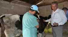 İLAN : Büyük Baş Hayvanların Çiçek Aşısı Yapılması!!