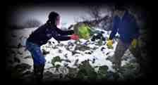 Anılarda Kışlaçay Gençliği (Karla Kaplı Tarlada Lahana Topladık)