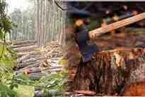 Orman Köylüsüyüz!!