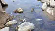 Sakarya Nehrinde Endişe Veren Balık Ölümleri!!