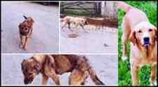 Kışlaçay Mahallesin'de 2 Köpek Öldü Peki Köpeklere Neler Oluyor!!!