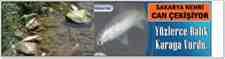 Geyve'de Balık Ölümleri Çoğaldı Yüzlerce Balık Karaya Vurdu!