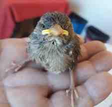 Boğazköy Mahallesin'de Örnek Bir Davranış Kuşlara Annelik Yaptı!