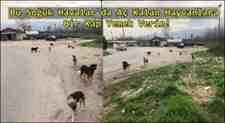 Köpekler Neden Saldırganlaştı,Saldırgan Köpeğe Neler Yapılır!