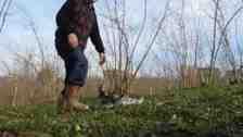 Kışlaçay Mahallesin'de Fındık Gübreleme Ve Çapalama Çalışması