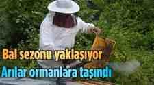 """SAYBB Mustafa Ör """"Bu Yıl Bal Üretimi Verimli Geçecek"""""""