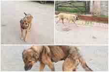 Dikkat : Bu Haber Kışlaçay Mahallesin'deki Başı Boş Köpekler İçin!