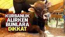 Mustafa Yıldız :Kurbanlık Seçerken Bunlara Dikkat Edin!