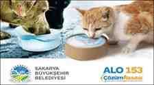Sakarya Büyükşehir Belediyesi Sokak Hayvanları İçin Bir Kap Su!
