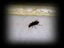 Kışlaçay Mahallesin'de Uçan Böcekler Çoğaldı!