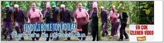 Kışlaçay Mahallesi Açma Tarlalarında Fındık Hasadı Horonla Başladı!