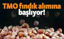 Ali Şener Bayraktar : TMO Fındık Alımına Başlıyor!