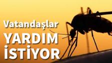 Sakarya'da Sivrisinek İstilası Kabusu Devam Ediyor!