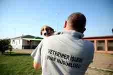 Sokak Hayvanlarının İhtiyaçlarına Ortak Olun!
