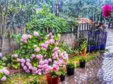 Sakarya'da yağışlar devam edecek mi?