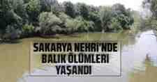 Dikkat ; Sakarya Nehri İçin Uyarı Geldi…