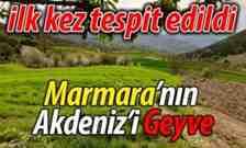 Marmara'nın Akdeniz'i Geyve.. İlk kez tespit edildi