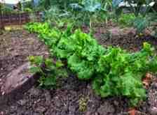 Kışlaçay'da Salgında Tarımın Önemi Daha da Arttı!