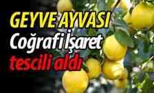 """""""Geyve Ayvası""""Coğrafi İşaret' belgesi aldı.."""