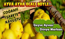 Geyve'nin 'Sarı Elmas'ı Coğrafi İşarete Kavuştu.