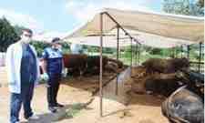 Arifiye Belediyesi Kurban Satış ve Kesim Yerlerini Denetliyor…
