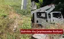 Çınardibi -Kışlaçay – Boğazköy'de Elektrikler Kuş Çarpılmasından Kesiliyor!