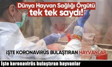 İşte koronavirüs bulaştıran hayvanlar.