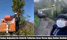 Sedaş Boğazköy'de Elektrik Tellerine Zarar Veren Ağaç Dallarını Budadı!
