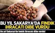 Bu yıl Sakarya'da fındık ihracatı dibe vurdu!