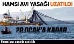 Hamsi avı yasağı 28 Ocak'a kadar uzatıldı.