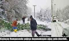 Kışlaçay Rampasında Kar yağışına dayanamayan ağaç yola devrildi..