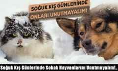 Soğuk Kış Günlerinde Sokak Hayvanlarını Unutmuyalım!..