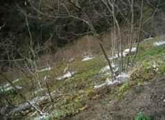 Kışlaçay Köyü'nde Potasyum Nitrat Zamanı.