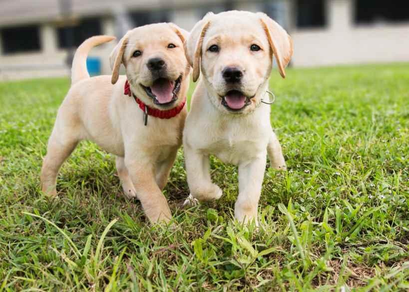 Evcil Hayvan Sahipleri Dikkat: Yeni Kurallar Getirildi.