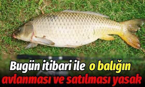 Bugün itibariyle o balığın avlanması ve satılması yasak!