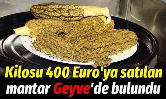 Kilosu 400 Euro'ya satılan mantar Geyve'de bulundu!