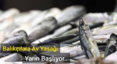 Dikkat ; Balıkçılara Av Yasağı Yarın Başlıyor..