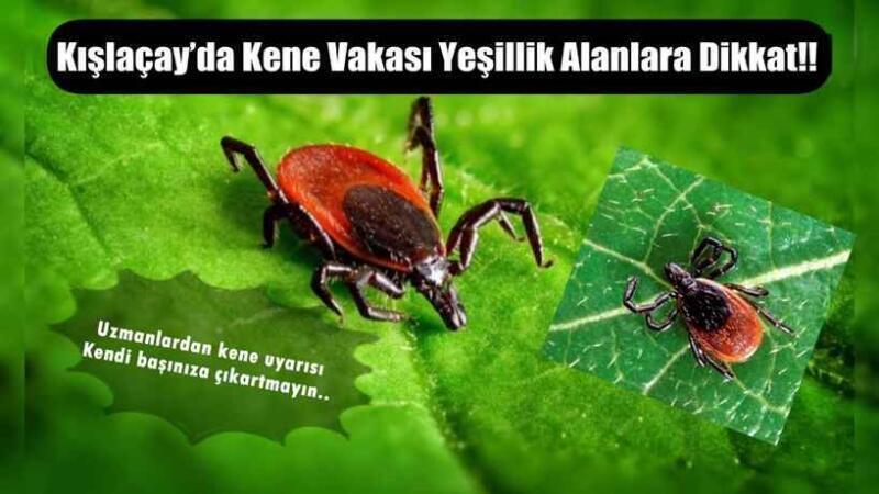 Kışlaçay'da Kene Vakası Yeşillik Alanlara Dikkat!!