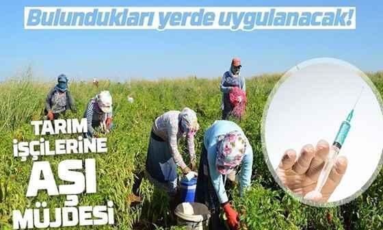 Tarım işçilerine bulundukları yerde aşı uygulanacak..